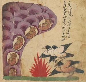 BSB Cod.arab.616 fol. 95v